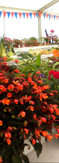 display of flowers and vegetables at Summer Flower  Show