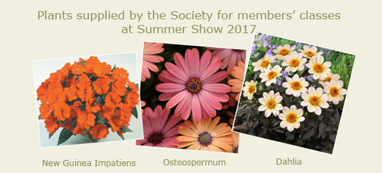 Plants supplied by the Society for members' classes at Summer Show 2017