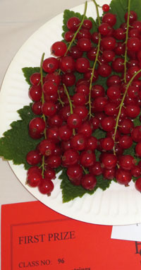 Redcurrants win first prize at the Nailsea Flower Show